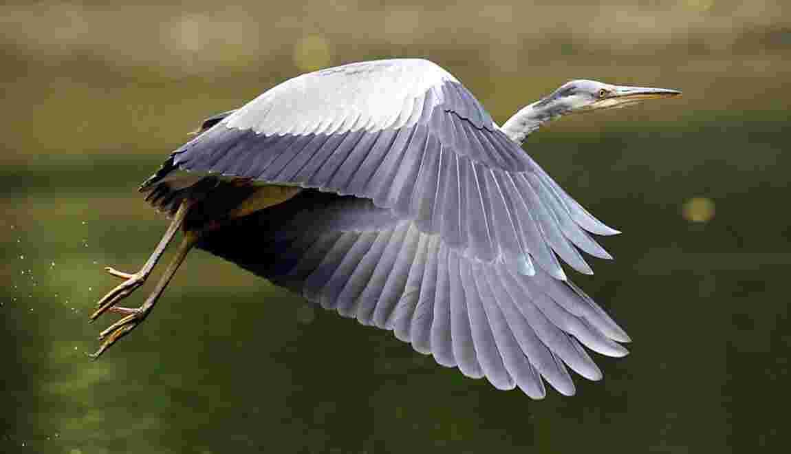 L'Agence pour la biodiversité, nouvel outil au service de la faune et de la flore