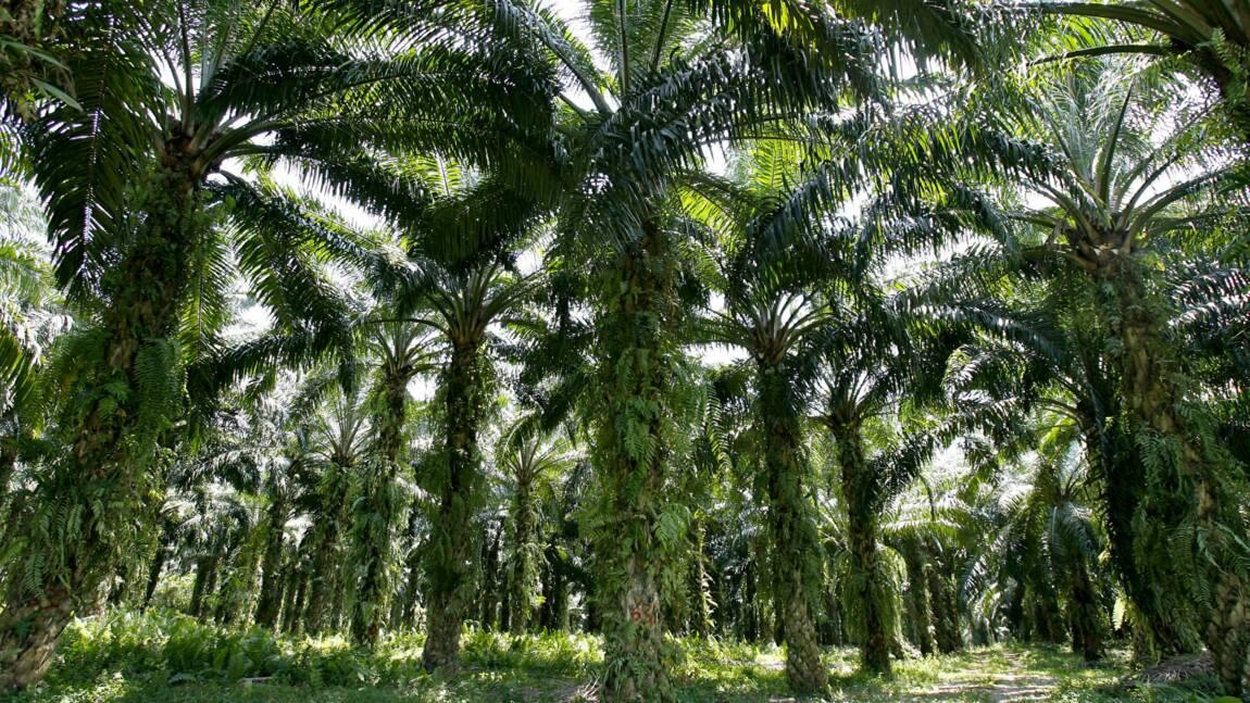 La bio-raffinerie de Total à La Mède sera dopée à l'huile de palme, dénoncent des ONG