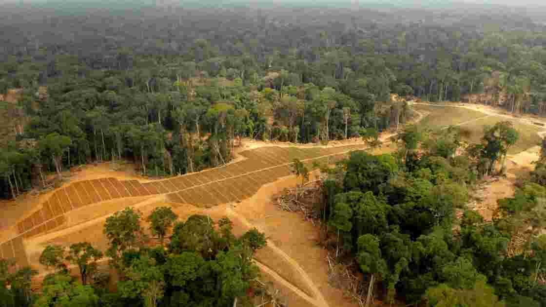 En Afrique centrale, la grogne monte contre l'huile de palme