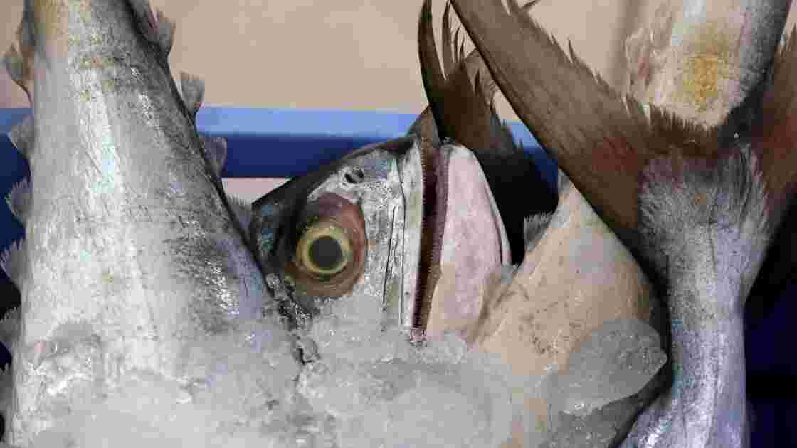 Pêche: 55% de la surface océanique exploitée par les grands chalutiers