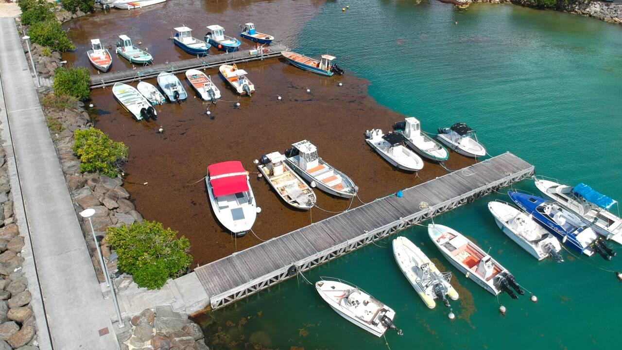 Le gouvernement au chevet des Antilles envahies par les sargasses