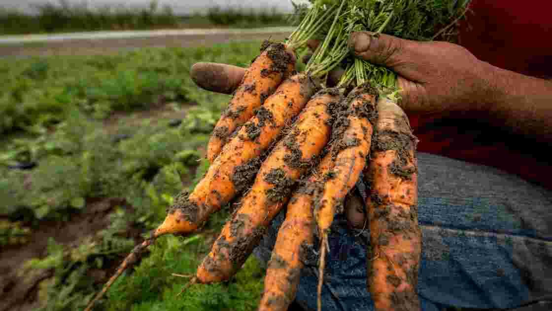 Les régions tentent d'accompagner l'essor de l'agriculture bio