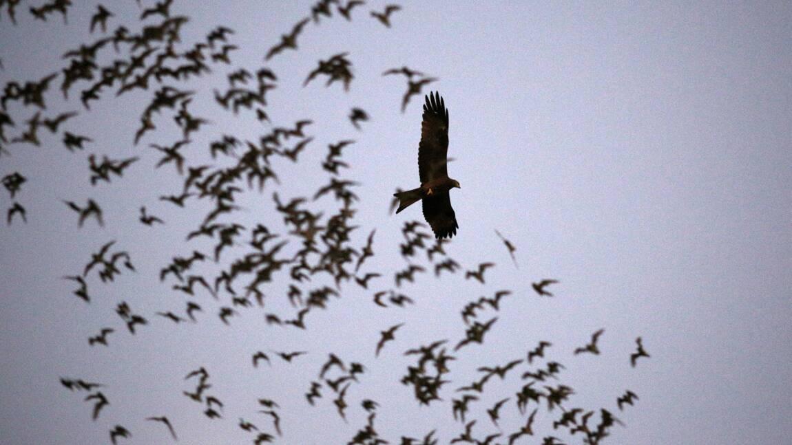 Inquiétude pour les chauve-souris d'Ile-de-France