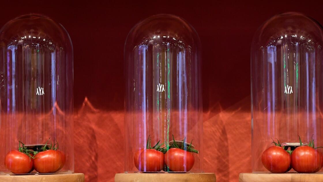 Êtes-vous prêt(e) à consommer les fruits et légumes de demain ?