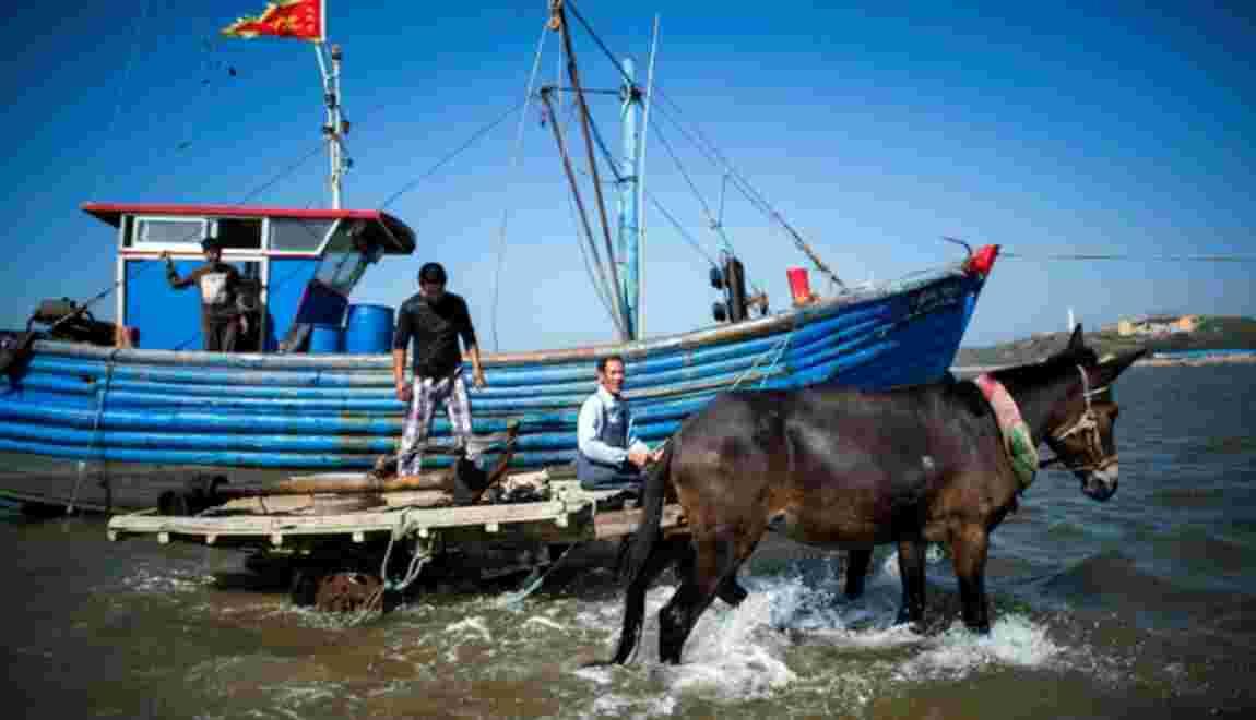 Chine: derniers tours de roue pour les laboureurs de la mer