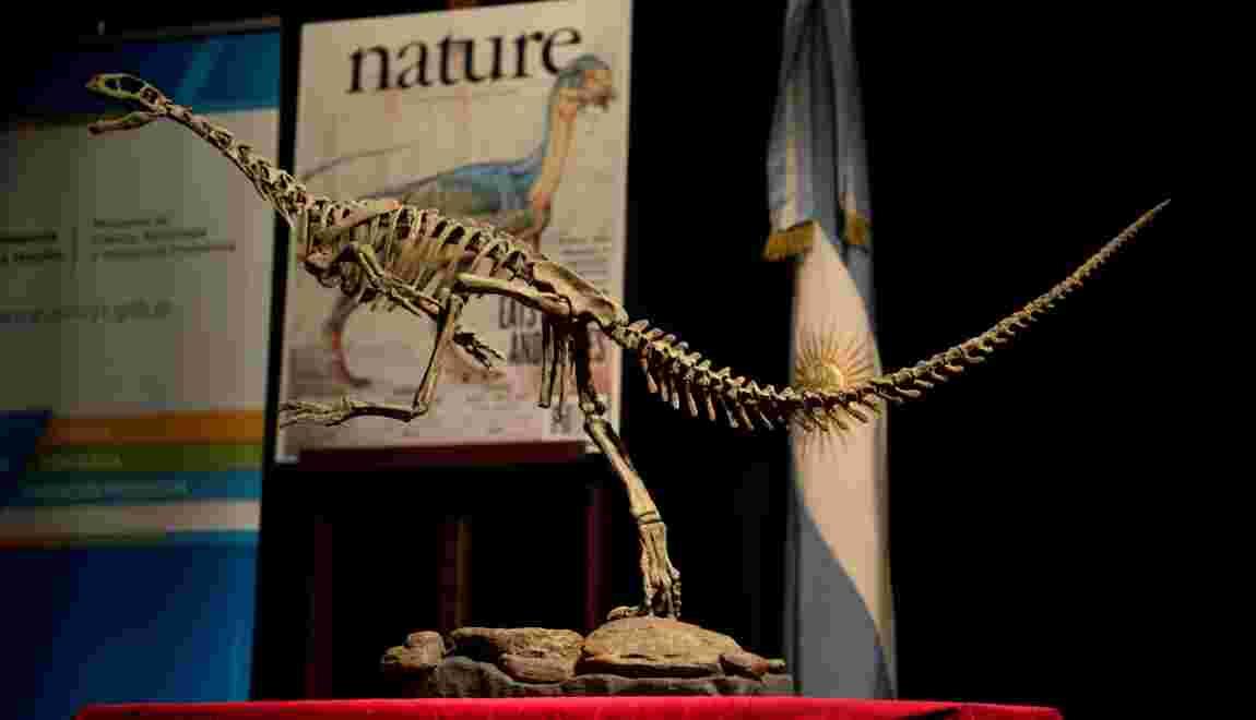 """Le Chilesaurus, """"l'un des dinosaures les plus intrigants"""", revèle ses secrets"""
