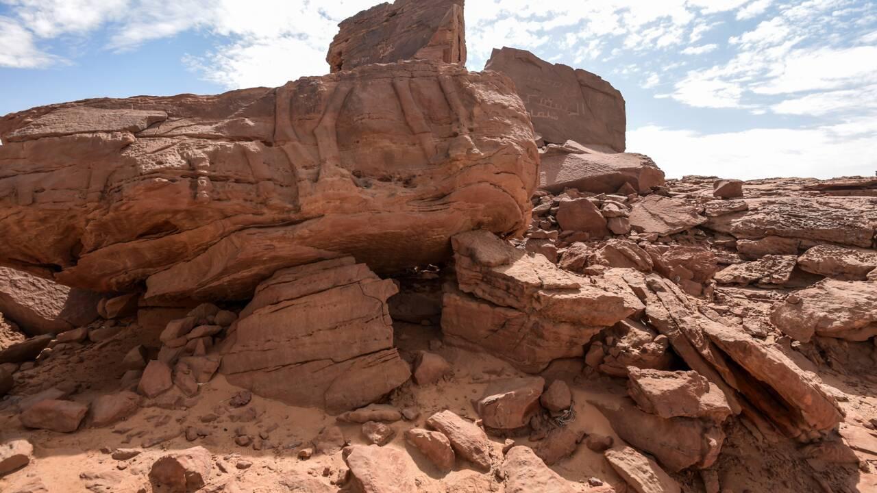 Mystères et sculptures de chameaux dans le désert saoudien