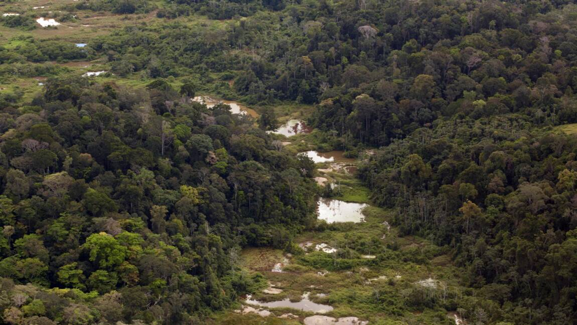 """Guyane: des associations demandent un moratoire sur la """"Montagne d'or"""""""