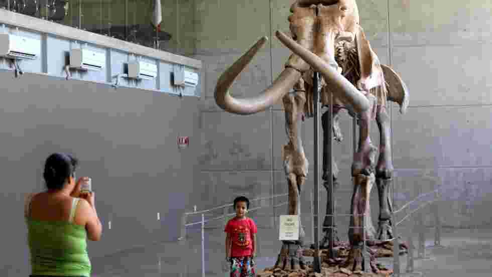 Pourquoi les mammouths laineux ont disparu