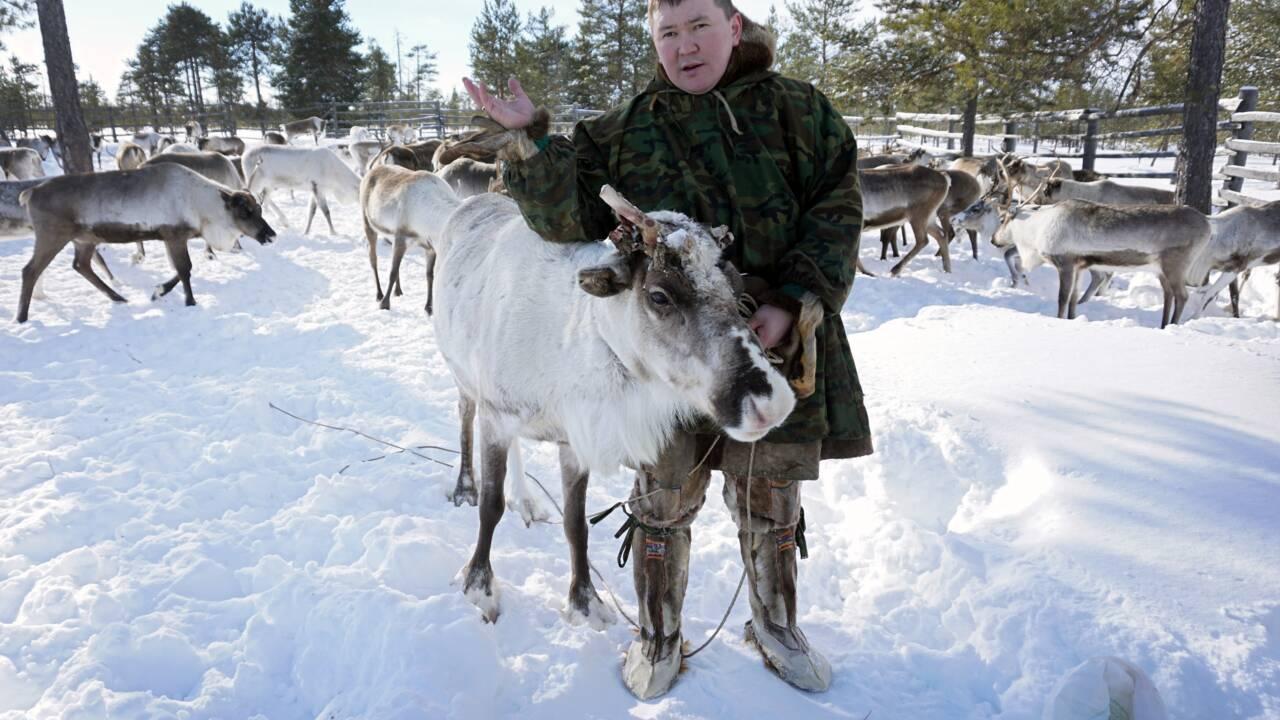 En Sibérie, les éleveurs de rennes face au rouleau compresseur pétrolier