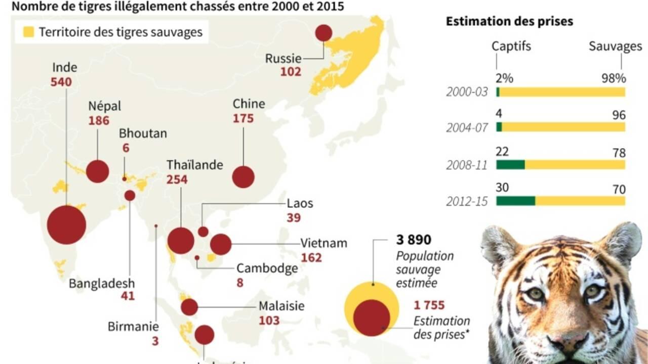 Les tigres menacés par le boom de la construction en Asie