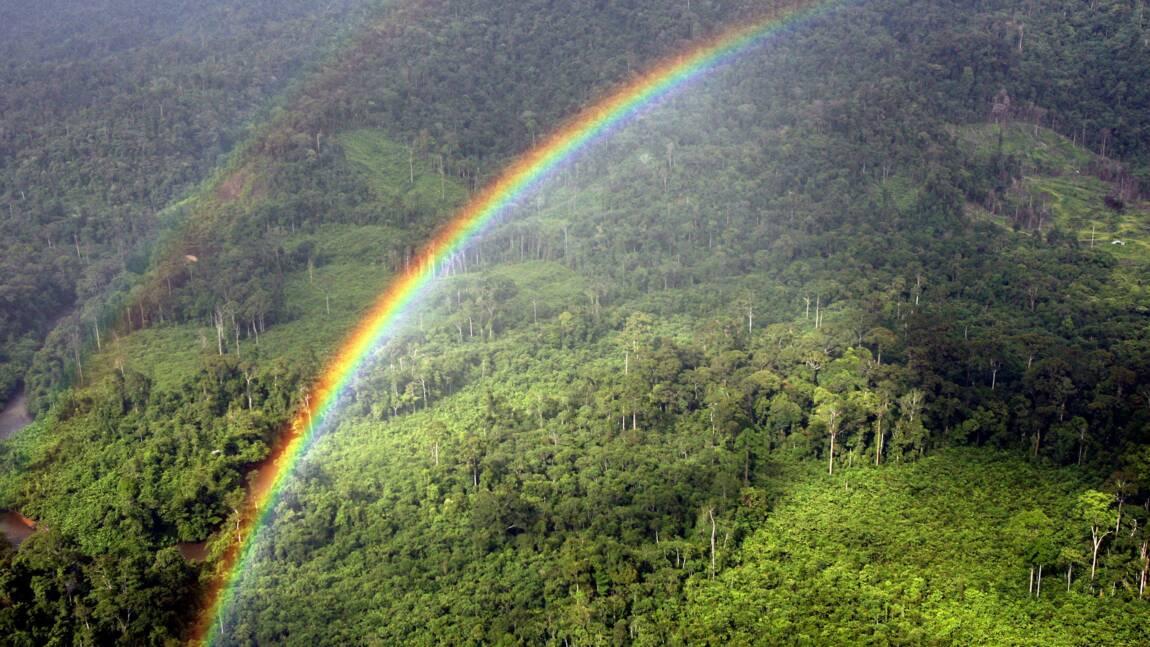 Forêt tropicale: des chefs religieux prennent leur bâton de pèlerin