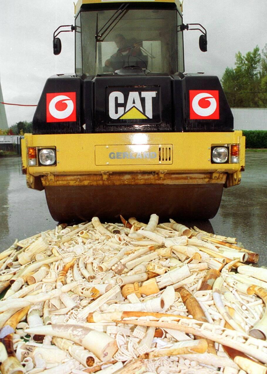 La Chine va interdire le commerce d'ivoire d'ici fin 2017