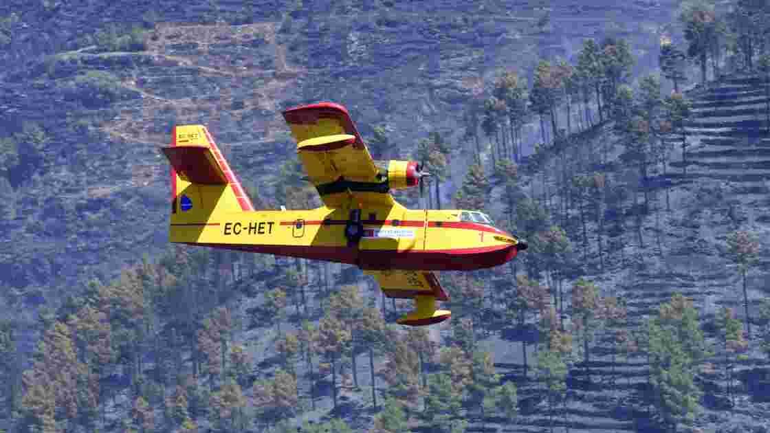 Le Portugal en guerre contre les eucalyptus après les incendies meurtriers