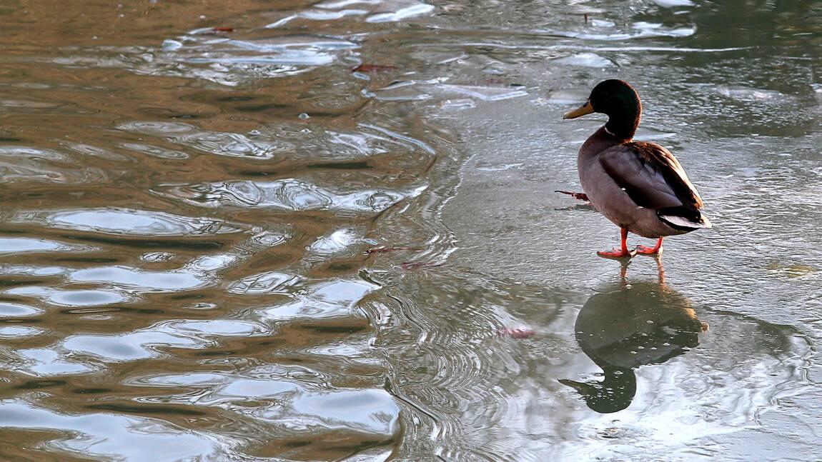 """L'eau des rivières dans un état """"calamiteux"""", selon UFC-Que Choisir"""