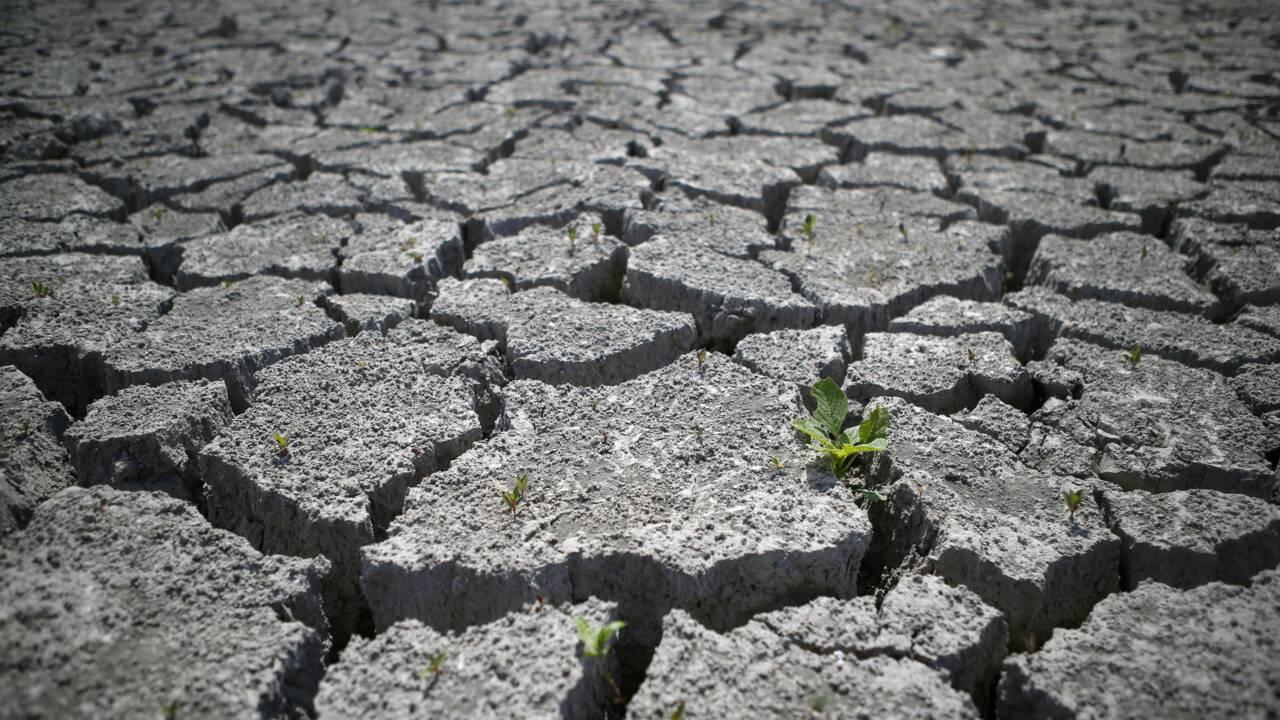 2017, 5e année la plus chaude en France et particulièrement sèche