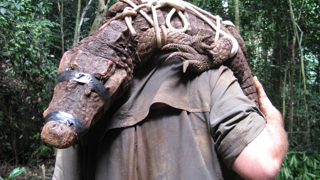 Au Gabon, des crocodiles orange uniques au monde