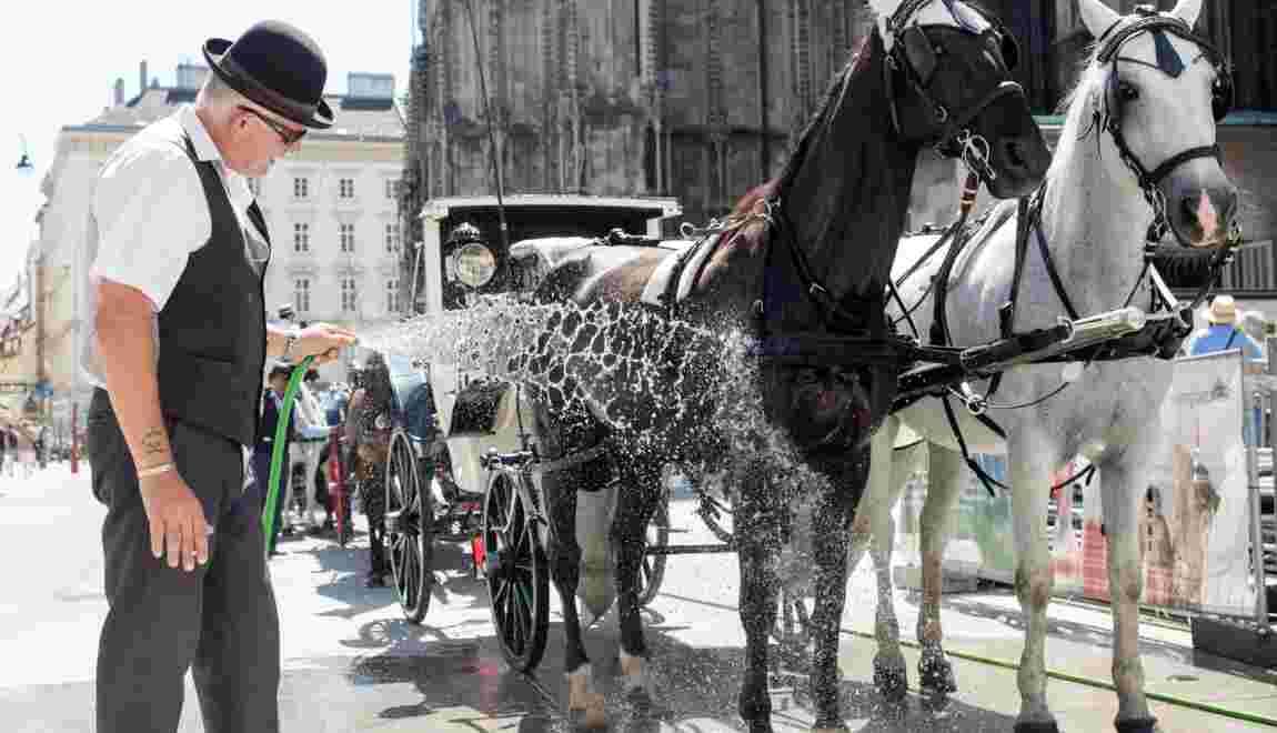 """Premier """"congé canicule"""" pour les chevaux de calèche viennois"""