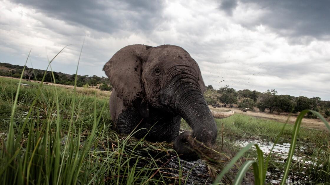 Quand la criminalité environnementale frappe même les sites de l'Unesco