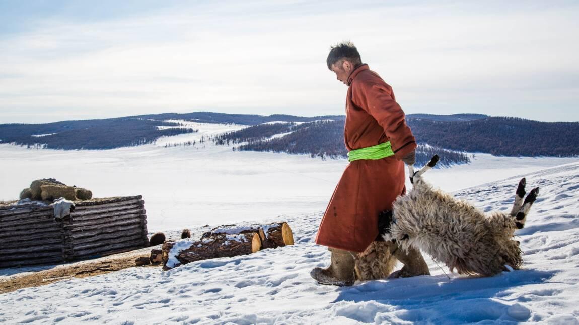 En Mongolie, par -50°C, un nouvel hiver extrême décime les cheptels