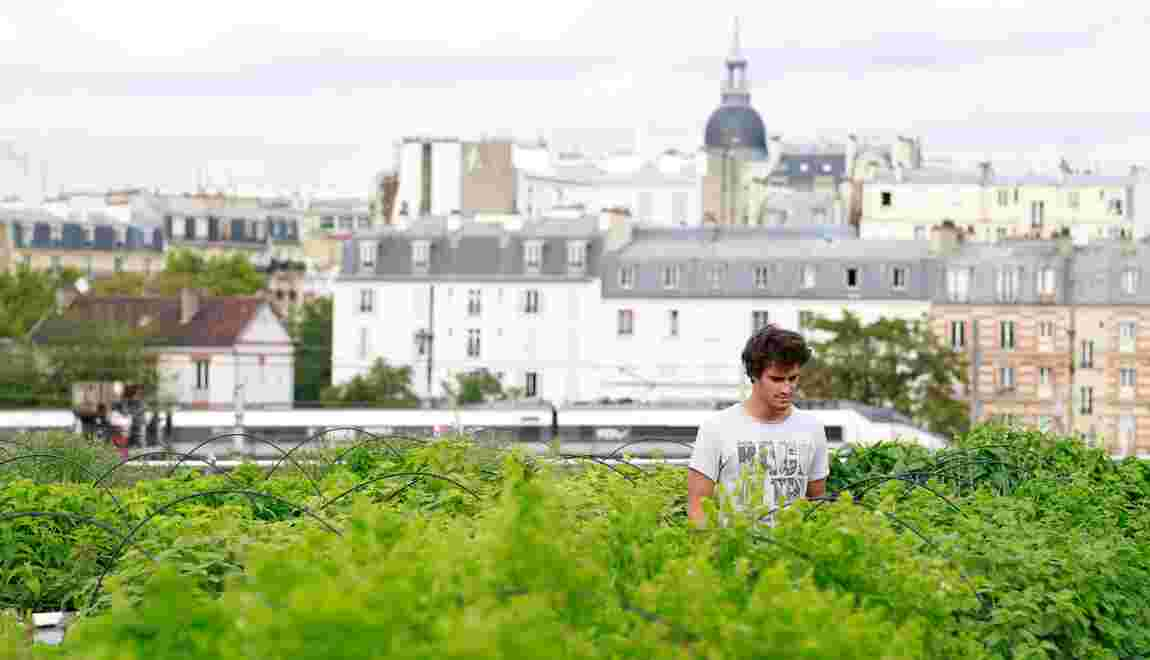 Sur un toit de la RATP, une ferme maraîchère