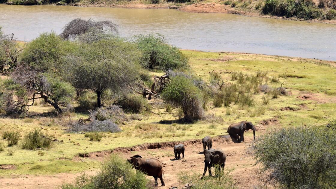Kenya : entre pillage et braconnage, la guerre des pâturages