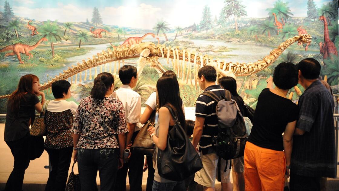 Des protéines retrouvées sur un dinosaure vieux de 195 millions d'années