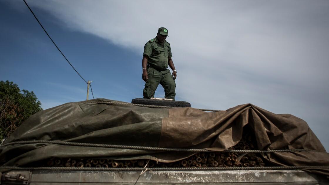 Mozambique: la guerre contre l'exploitation illégale des forêts