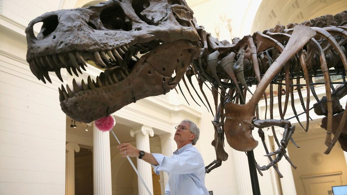 Le Tyrannosaurus Rex n'était pas un dinosaure à plumes