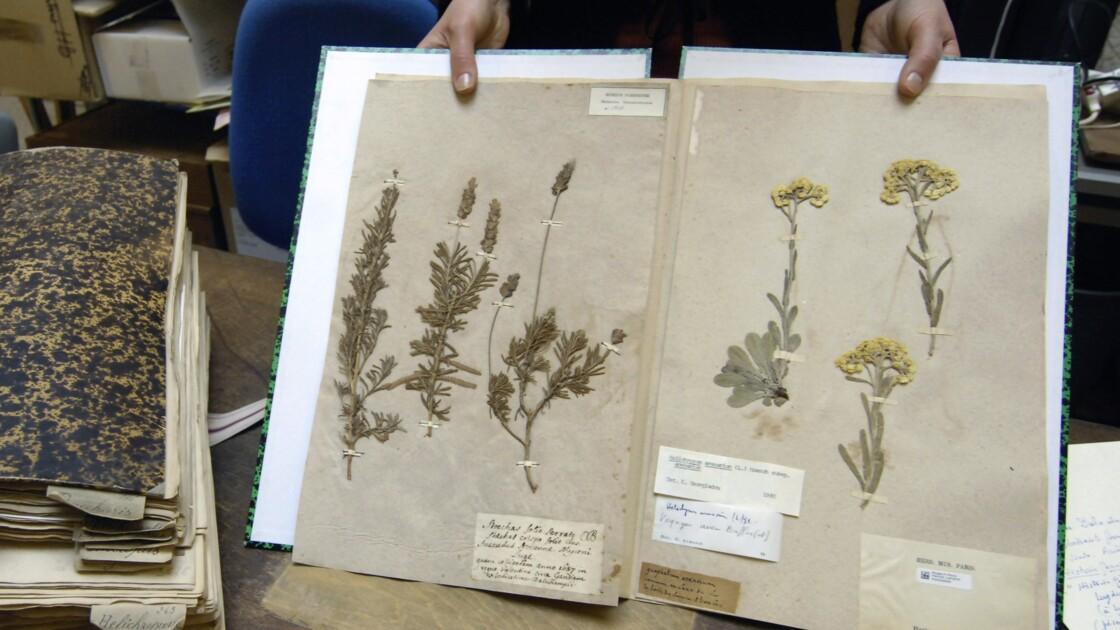 """Les herbiers du Muséum sont de sortie pour l'exposition """"Jardins"""""""