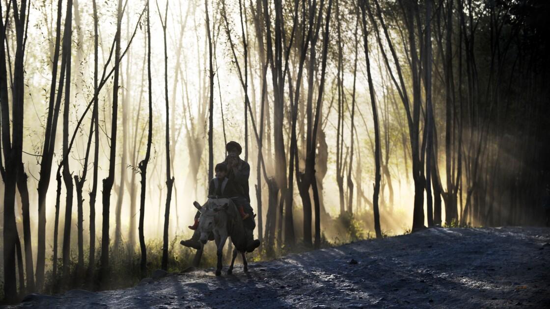 Le chef des talibans afghans appelle à planter des arbres