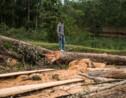 RDC: réattribution de concessions forestières à des Chinois malgré un moratoire