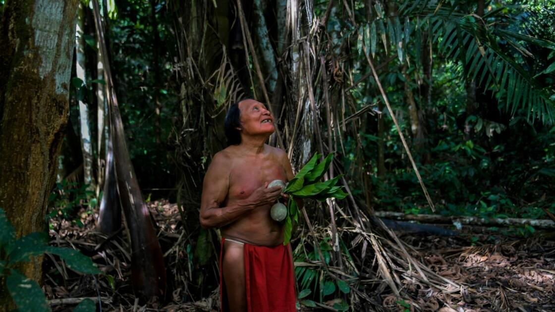 La forêt amazonienne, source de vie des indiens Waiapi