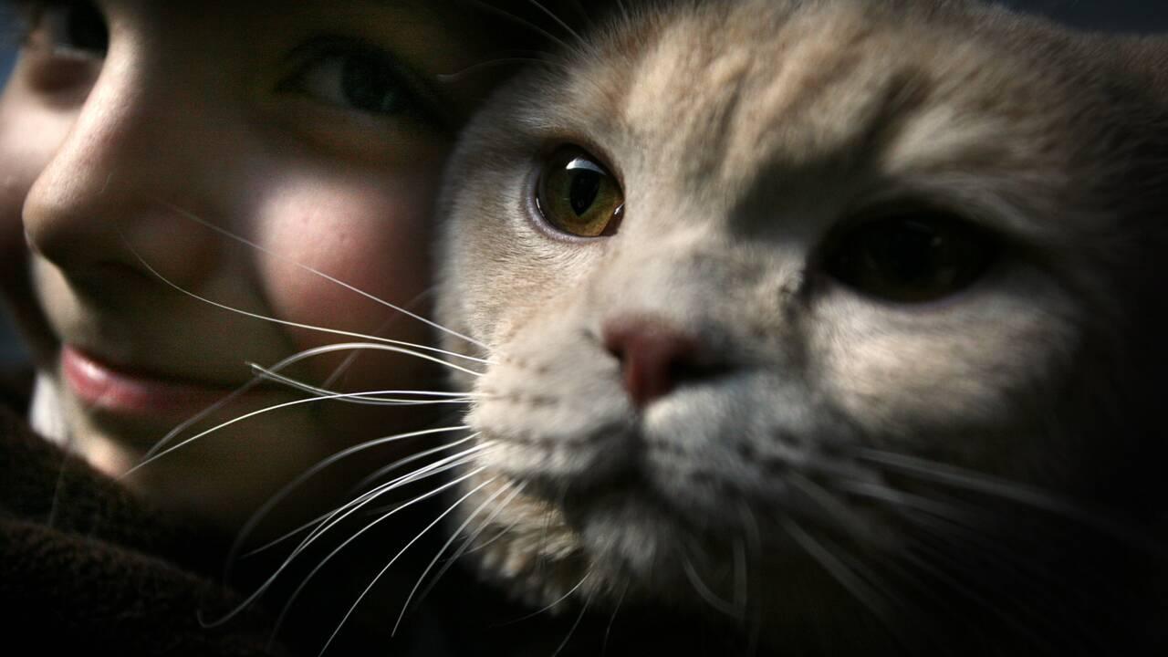 Comment le chat est devenu l'animal de compagnie numéro un