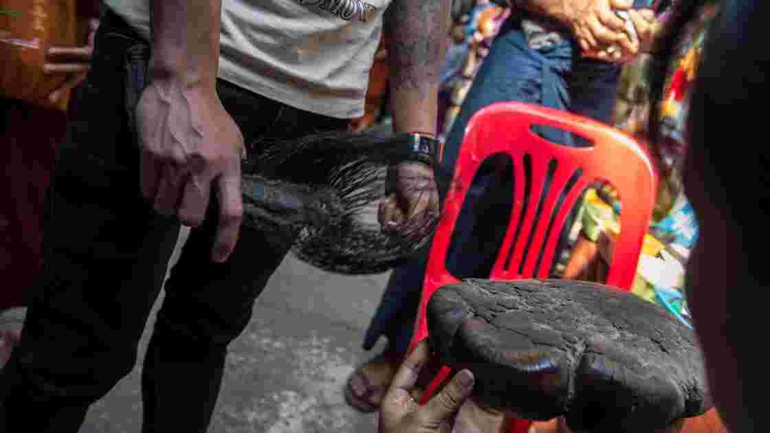 Le braconnage des éléphants s'intensifie en Birmanie