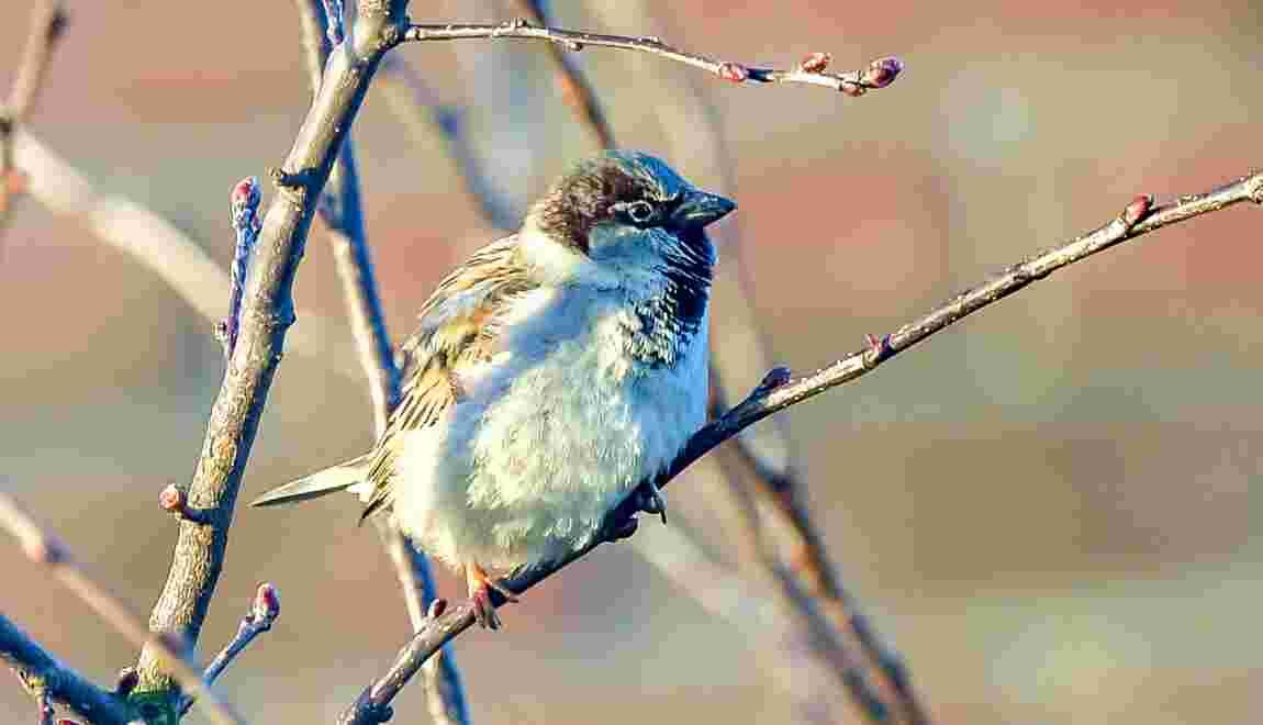 Vive inquiétude pour les oiseaux, les chauves-souris et les saumons
