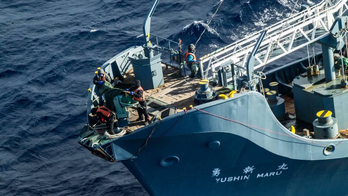 Le Japon lance une nouvelle campagne de pêche à la baleine
