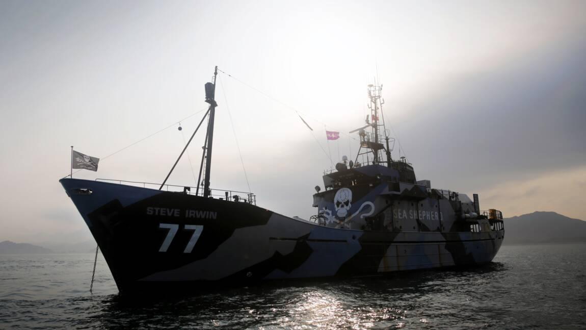 """Sea Shepherd retrouve un baleinier japonais """"derrière un iceberg"""""""