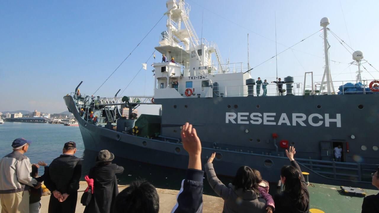 Le Japon lance une nouvelle campagne de chasse à la baleine