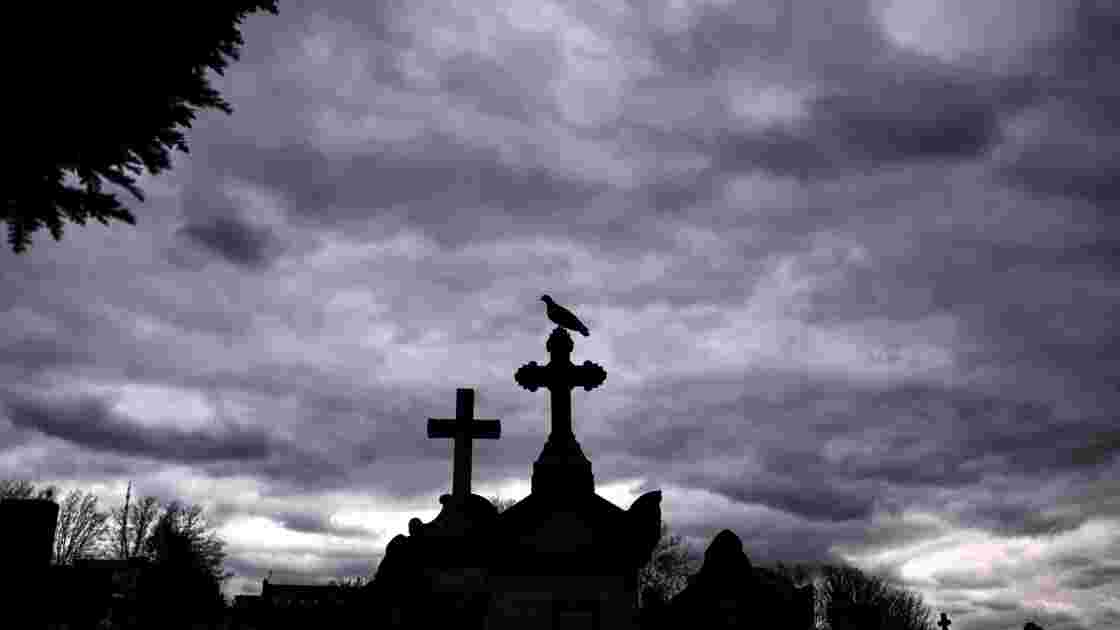 Quand un des plus vieux cimetières devient un refuge pour oiseaux