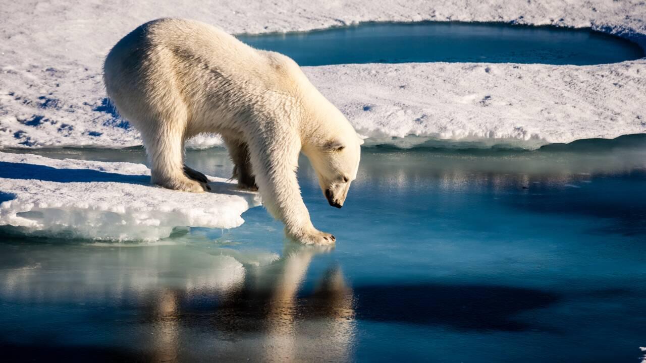 Arctique: pas d'exploration pétrolière jusqu'en 2022