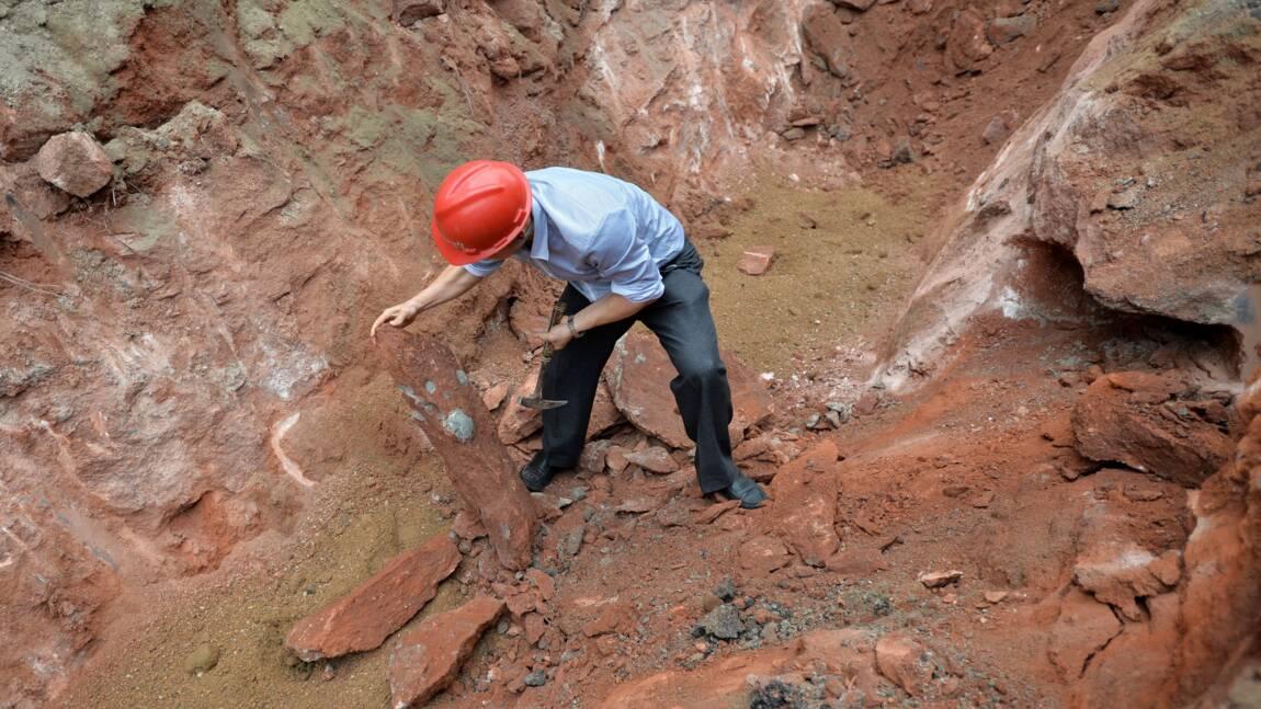 Des fossiles d'une loutre géante retrouvés en Chine