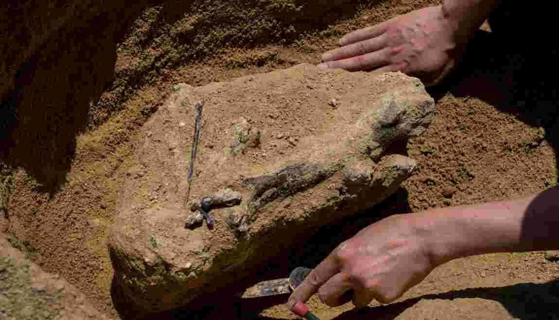 Et si l'ancêtre de l'homme était bulgare ?