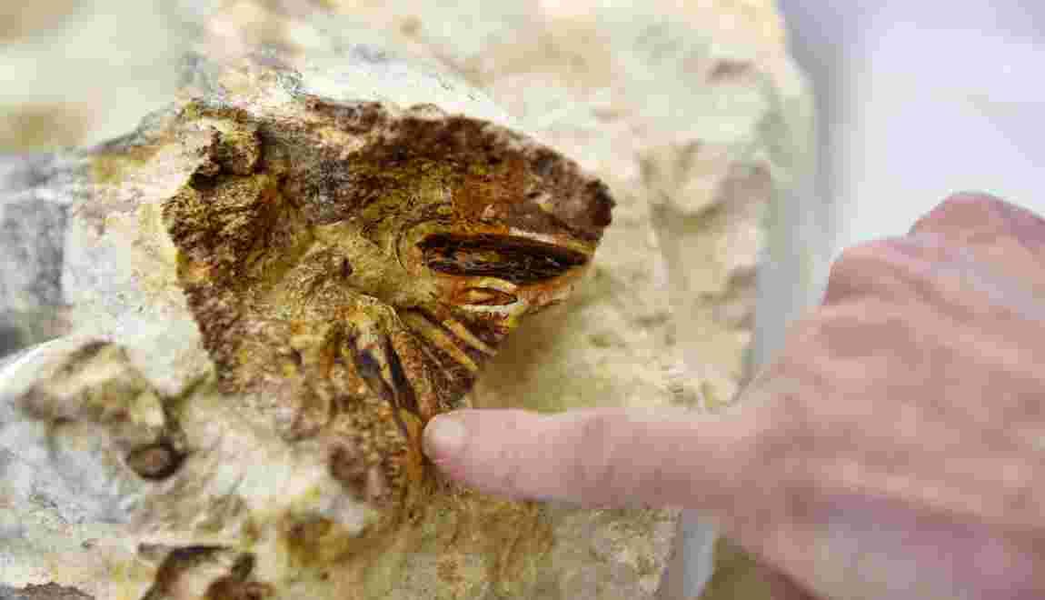 Le fossile d'un reptile marin rarissime découvert dans le Maine-et-Loire