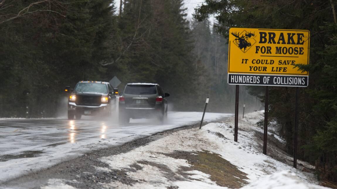Canada: danger de disparition du caribou, le gouvernement impuissant