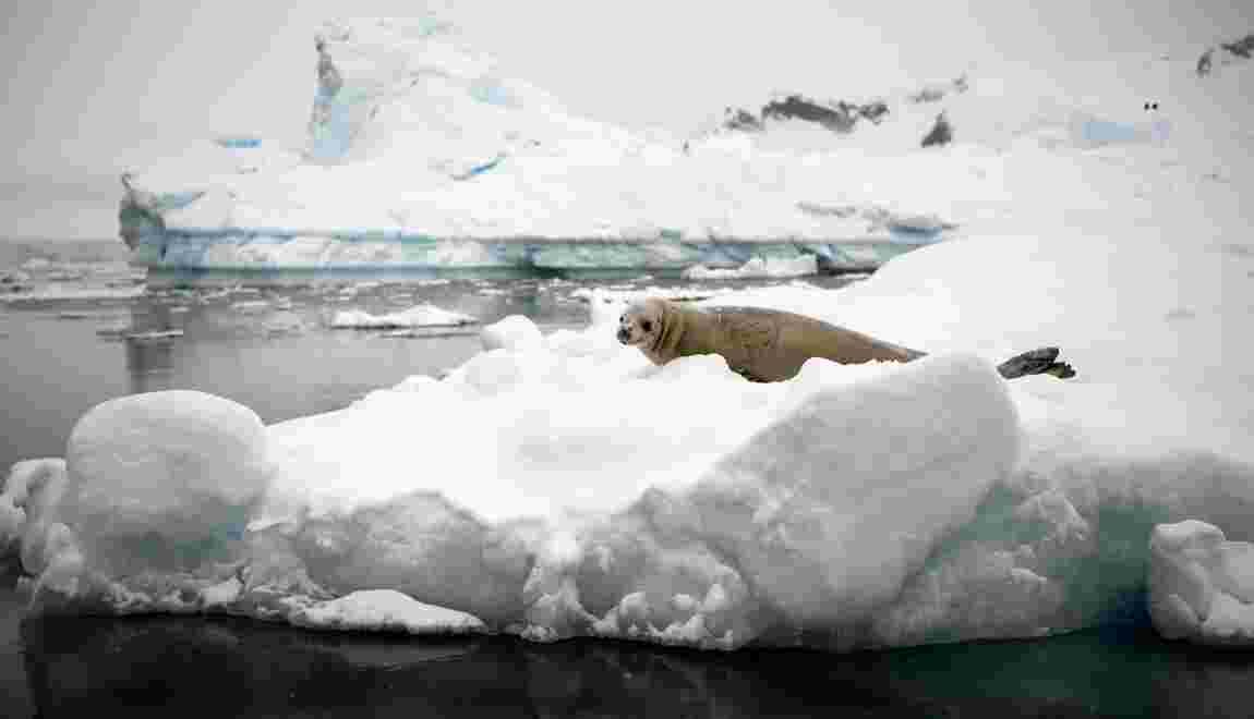 Une Polonaise gagne à pied le pôle Sud