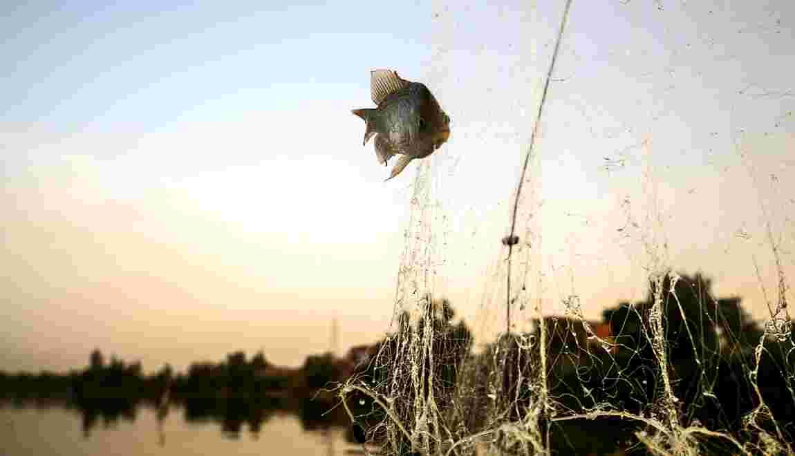 """Egypte: à Menouf, chez les pêcheurs de la """"mer pharaonique"""""""
