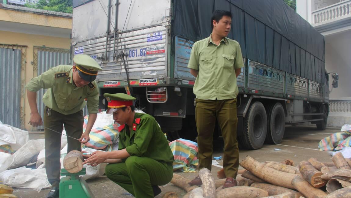 Près de trois tonnes d'ivoire saisies au Vietnam
