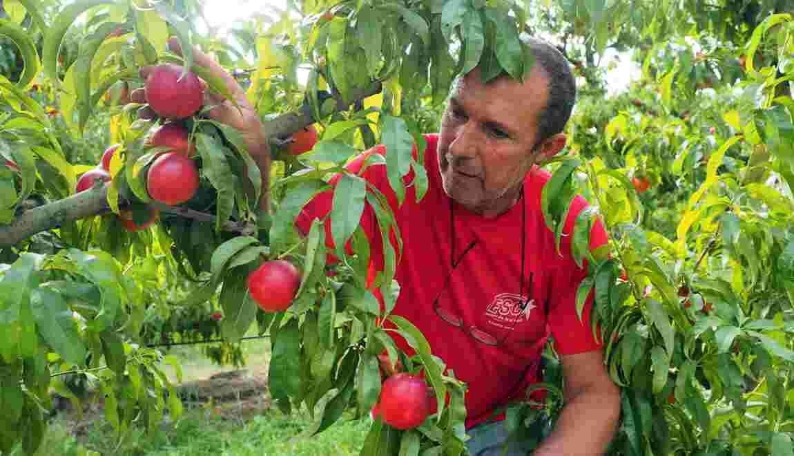 Agriculture: Les producteurs bio demandent la transparence sur les prix
