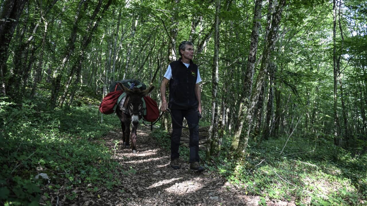 VIDÉO - Entre Champagne et Bourgogne, le premier parc national dédié à la forêt